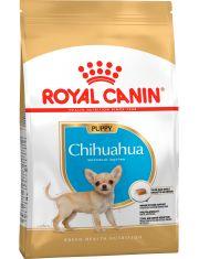 Chihuahua Puppy для щенков породы чихуахуа в возрасте до 8 месяцев
