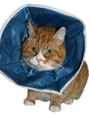 Защитный воротник для кошек и маленьких собак мягкий
