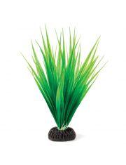 """Растение """"Сагиттария"""" зеленая"""