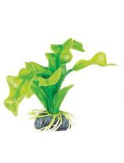 """Растение """"Апоногетон"""" зеленый"""