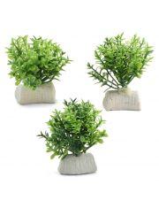 """Растение """"Микрантемум"""" (набор 3шт)"""