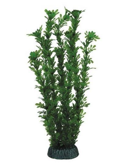 Растение Лигодиум зеленый
