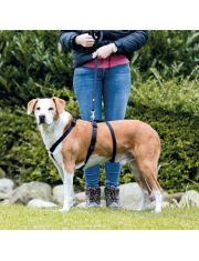 Шлейка Stay для неуверенных (пугливых) собак