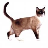 Взрослые кошки (1-6 лет)