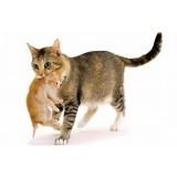 Котята и Беременные кошки