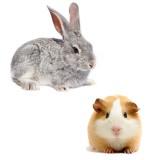 Для кроликов и морских свинок