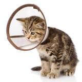 Ветеринарные аксессуары