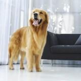 Для домашних собак