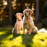 Собаки на свежем воздухе