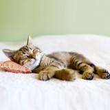 Для домашних кошек