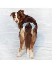 Absorb  трусы для собак многоразовые