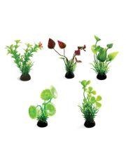 Растения аквариумные