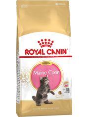 Maine Coon Kitten для котят породы Мейн-Кун до 15 месяцев